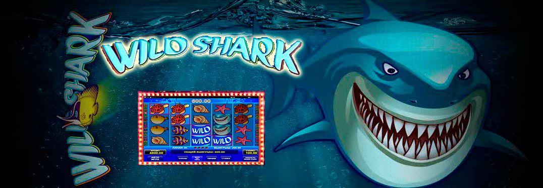 slot wild shark